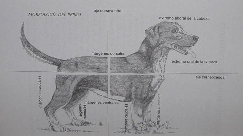 Perfecto Anatomía Canina Virtuales Bandera - Anatomía de Las ...
